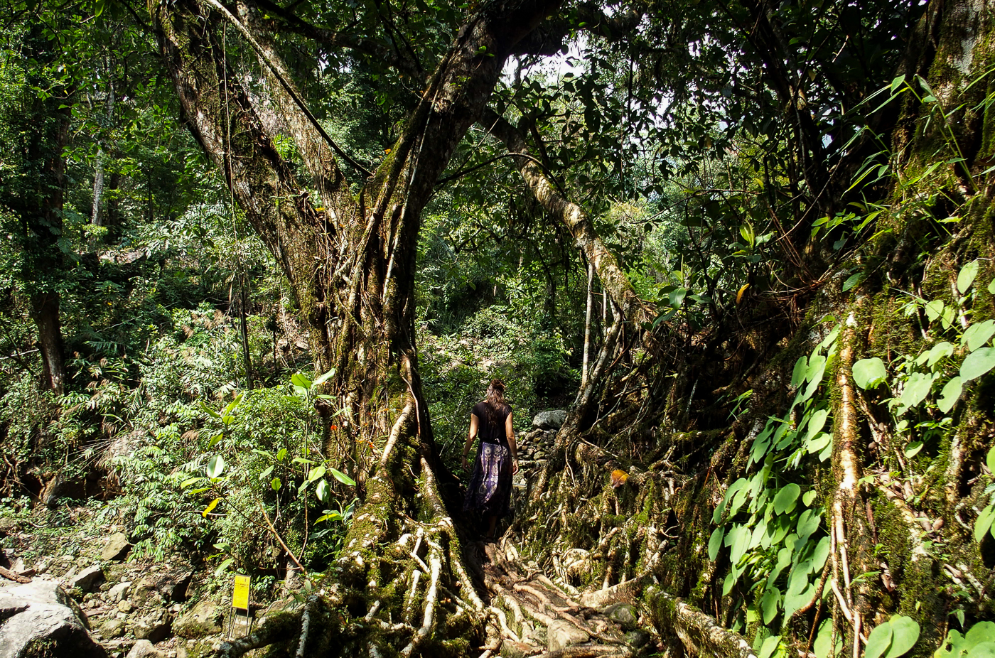 Taming the Jungle in Meghalaya