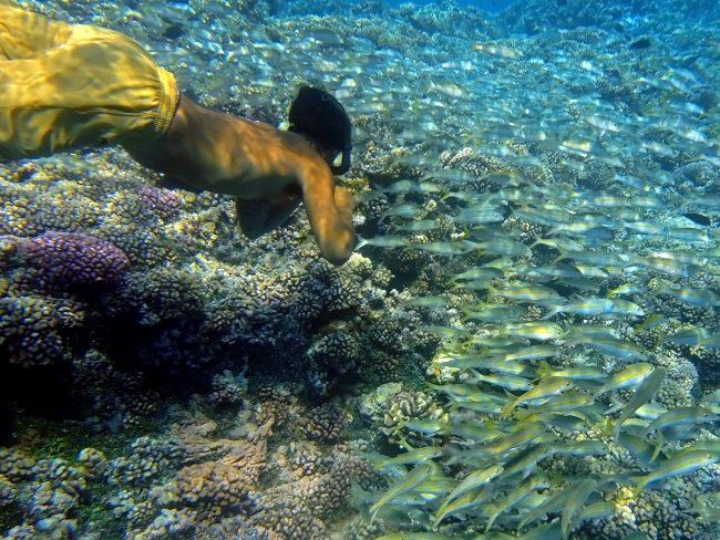 Mi nikoli ne zmanjka motivov za podvodno fotografijo?