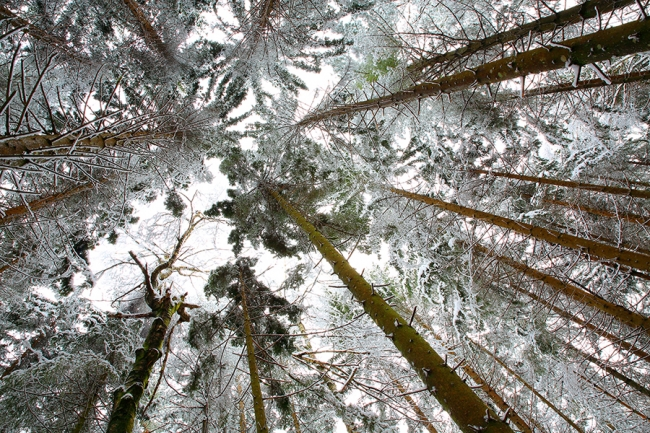 Kočevski gozd ob prvem sneženju